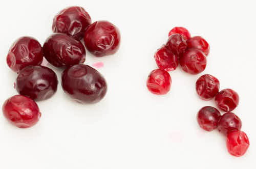 North American and European cranberries on a white table.