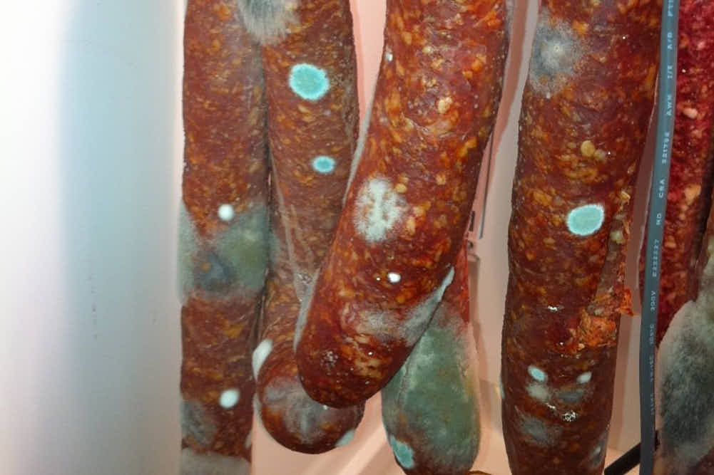 Bad green mold on salami.